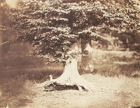 Gustave Le Gray, Tree